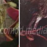ACUZAŢIE: În adăpostul Primăriei Târgovişte, câinii sunt măcelăriţi, n...