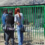 DÂMBOVIŢA: Câinii salvaţi din adăpostul Primăriei Târgovişte ajung în ...