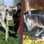 PENAL: Cal maltratat şi lăsat să moară într-un zăvoi din judeţul Argeş...