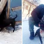 VIDEO: Dosar penal pentru cruzime împotriva animalelor. Îşi folosea Pi...