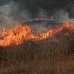 ATENŢIE! Natura nu se primeneşte folosind focul! Obligaţii şi amenzi