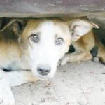 4 APRILIE: Ziua internaţională a animalelor fără stăpân