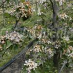 DEMERS: Senatorul Ţuţuianu cere ajutor de stat pentru culturile agrico...