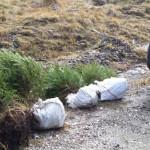 DÂMBOVIŢA: Prinşi de jandarmi când furau puieţi de molid din munte!