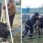 DÂMBOVIŢA: Cal abandonat într-un canal, salvat de pompieri!