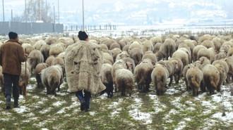 FOTO ARHIVĂ (Sursa: www.lumeasatului.ro)